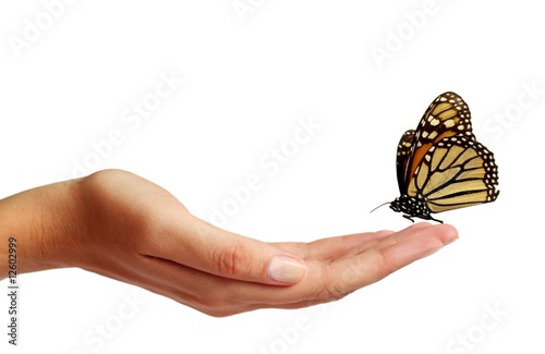 Fotografía  Butterfly on a hand