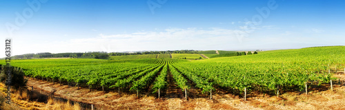 Photo sur Aluminium Vignoble Vineyard Panorama