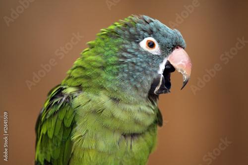 Fond de hotte en verre imprimé Perroquets Noisy Parrot