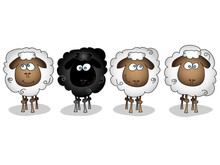 Different Sheep Isolated