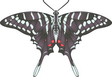 Collection Of Butterflies: Gra...