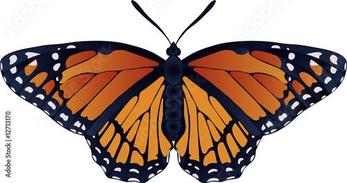 Fotografie, Obraz  Collection of butterflies: Danaus plexippus