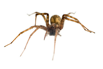 Isolated Spider