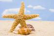 Starfish Border