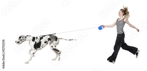 Fototapeta young girl walking her dog (Great dane 4 years) harlequin Great obraz