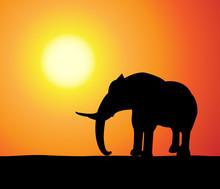 Elefant At Sunset