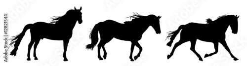 Fotografía  silhouette of horses standing, trotting, and galloping