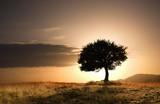 Samotne drzewo i zachód słońca