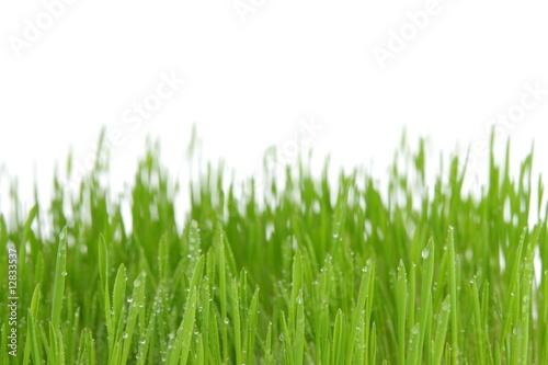 Photo sur Aluminium Herbe Fresh green grass