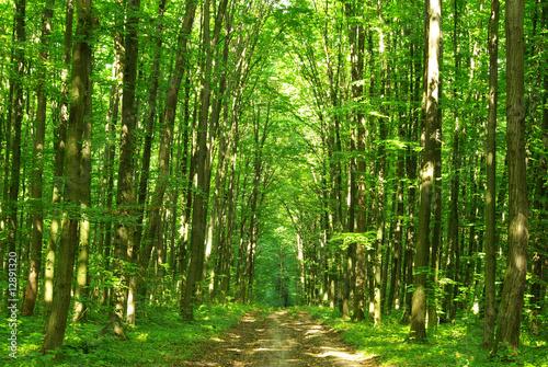 Fototapeta green forest obraz na płótnie