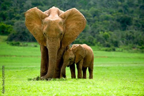 Keuken foto achterwand Olifant Elefantenmutter mit Jungtier