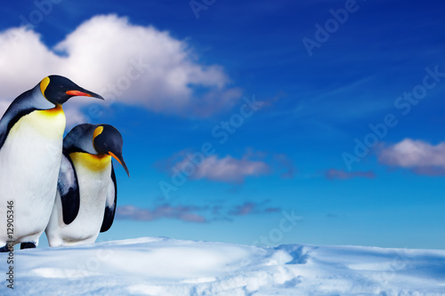 Two penguins in the snow