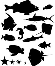 Many Silhouettes Of Fish And Other Water Animals