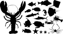Many Silhouettes Of Water Animals