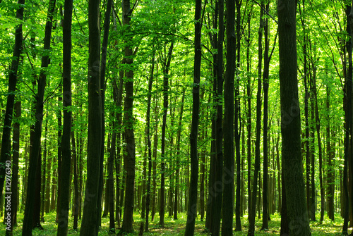 Recess Fitting Forest forest