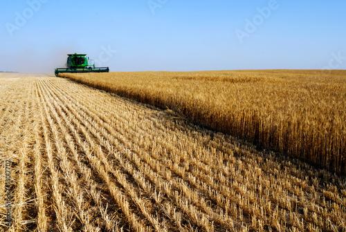 Deurstickers Platteland combine harvesret