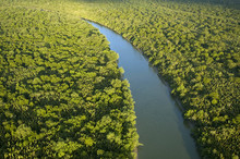 Aerial View Of Mangrove Forest...