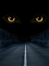 Horror In Night