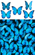 Blue Butterfly Morphinae Pattern