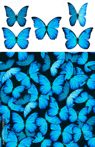 Valokuva  Blue butterfly Morphinae pattern