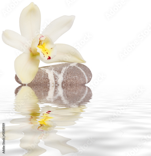 Doppelrollo mit Motiv - orchidea riflessa