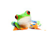 canvas print picture frog curious isolated on white