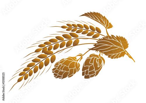 Láminas  Hops and wheat
