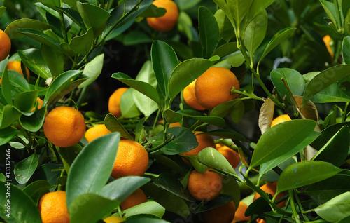 Fényképezés oranger