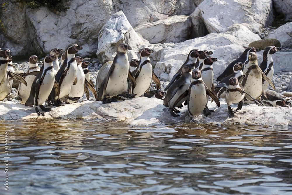 Gruppe von Pinguinen