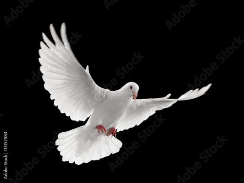 Foto-Flächenvorhang ohne Schienensystem - dove flying (von Okea)