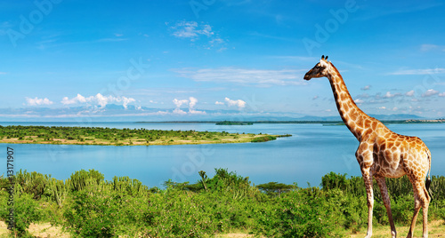 Photo sur Toile Girafe Nile river, Uganda