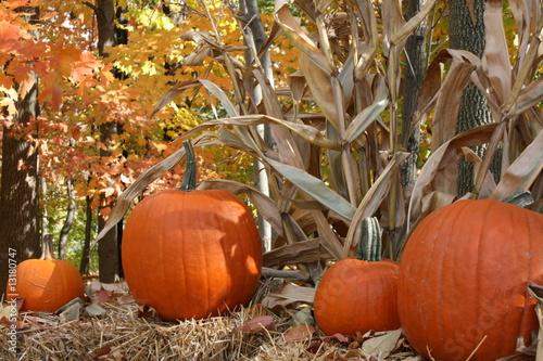 Valokuva  Fall Foliage