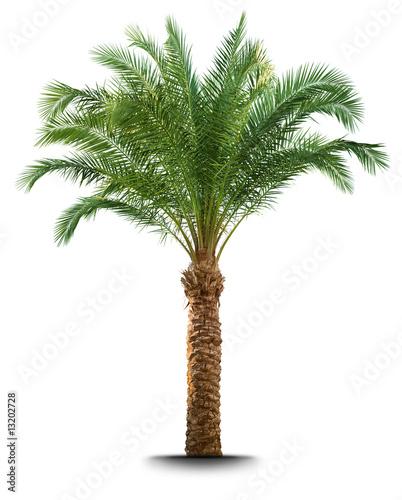 Spoed Foto op Canvas Palm boom Palm tree