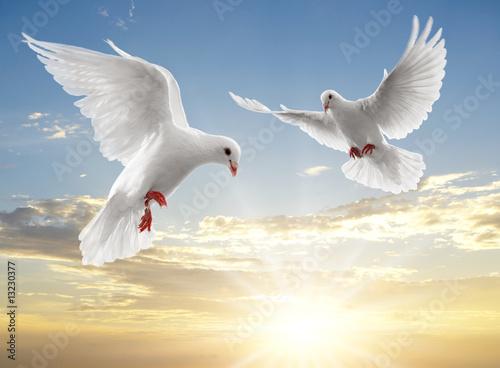Foto-Flächenvorhang ohne Schienensystem - two dove (von Okea)