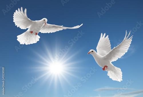 Foto-Flächenvorhang ohne Schienensystem - two pigeons (von Okea)