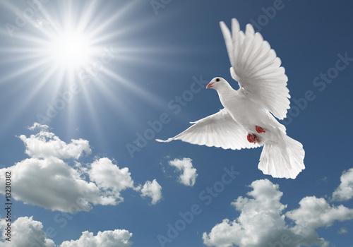 Foto-Flächenvorhang ohne Schienensystem - pigeon in the sky (von Okea)