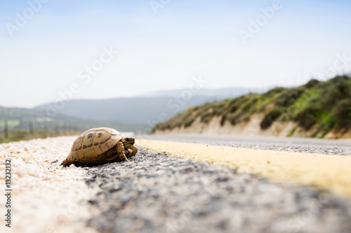 Poster Tortue Tortoise On The Road
