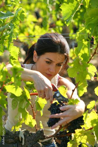 Fotografía  femme travaillant dans les vignes