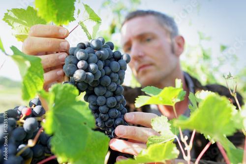 homme travaillant dans les vignes Fototapete