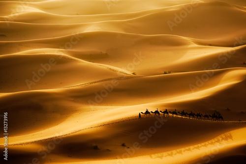 Fotobehang Kameel Camel Caravan