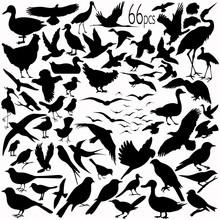 66 Pieces Of Vectoral Bird Silhouettes.