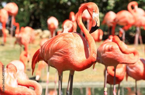 Aluminium Prints Flamingo red flamingo in a park in Florida