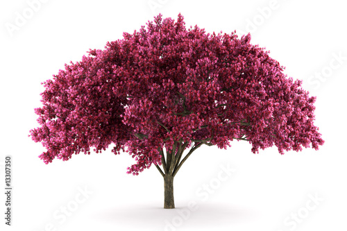 cherry tree isolated on white background with clipping path Fototapet
