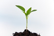 canvas print picture - Junge Pflanze