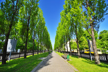 Green Alley In Town