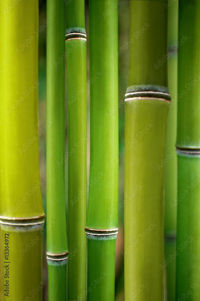 cr dence de cuisine en verre imprim bambus. Black Bedroom Furniture Sets. Home Design Ideas
