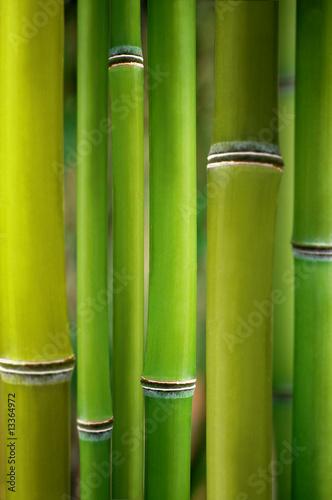 Foto-Duschvorhang - bambus (von Stockwerk-Fotodesign)
