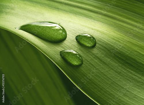 Foto-Duschvorhang - Plantleaf (von Pefkos)