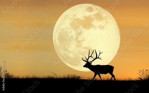 Photo Elk Silhouette