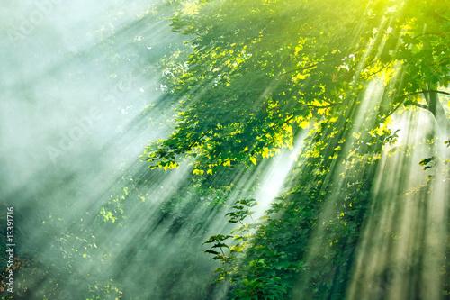 Papiers peints Foret brouillard sunlight mist forest